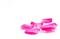Pink rose petals beautiful patals on a white background Stock Photo