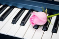 Pink rose on the piano keyboard Royalty Free Stock Photo