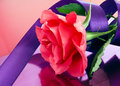 Pink rose with purple ribbon on shiny surface and Royalty Free Stock Photography