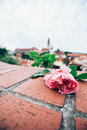 pink rose on red brick with blured Cesky krumlov castle Royalty Free Stock Photo
