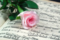 Pink Rose And Sheet Music