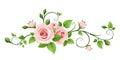 Pink rose vine. Vector illustration. Royalty Free Stock Photo