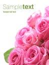 Ružový ruže