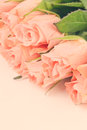 Pink roses border Royalty Free Stock Photography