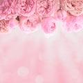 Pink roses border Royalty Free Stock Photo
