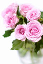 Pink roses bouquet Stock Photo