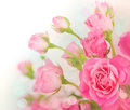 Pink roses bouquet greeting card Royalty Free Stock Images