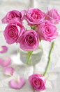 Pink roses bouquet of small Stock Image
