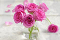 Pink roses bouquet of small Stock Photography