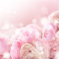 Pink roses bunch Royalty Free Stock Photo