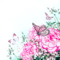 Pink roses and butterfly bouquet of floral background Stock Photos
