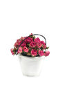 Pink roses in a decorative small white bucket bouquet of Royalty Free Stock Images