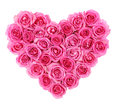 Pink roses in heart shape isolated isolated on white Royalty Free Stock Photo