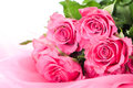 Pink roses many on a textile Royalty Free Stock Image