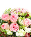 Pink roses over white background Stock Photo