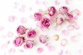 Pink roses and petals scattered on white background. Flat lay, overhead view Royalty Free Stock Photo
