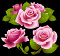 Pink roses set Royalty Free Stock Photos