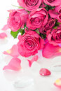 Pink roses with stones on white Stock Image