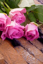 Pink roses for valentines day Royalty Free Stock Photos