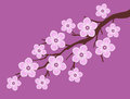 Pink sakura cherry blossom branch with dark pink background illustration Royalty Free Stock Photo