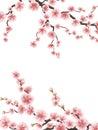 Pink sakura cherry blossoms. EPS 10