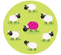 Pink sheep is lonely in the middle of white sheep Stock Photos
