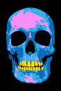 Pink skull colorful abstract for designers Stock Photography