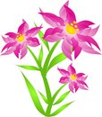 Pink spring flower illustration of with leaves Royalty Free Stock Photo