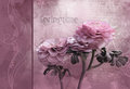 Pink spring time flower - Artistic background for your own creat Royalty Free Stock Photo