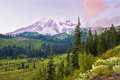 Pink time of the mount rainier this shot was taken in national park Royalty Free Stock Image