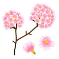 Pink Trumpet Flower Tree. isolated on White Background. Vector Illustration