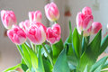 Pink tulips on abstract background. Pink tulip. Tulips. Flowers. Royalty Free Stock Photo