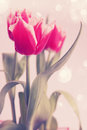 Pink tulips beautiful bouquet of terry tinted Royalty Free Stock Images