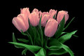 Pink tulips on a black background Royalty Free Stock Photo