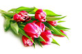 Pink tulips bouquet isolated on white background Stock Images