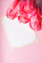 Pink tulips and card Stock Photography