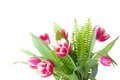 Pink tulips with fern on white background Stock Images