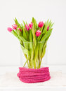 Pink tulips in glass vase bunch of on white background Stock Photo