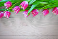 Pink tulips on gray wood background Royalty Free Stock Photography