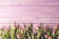 Pink tulips on pink wooden background, happy easter, springtime Royalty Free Stock Photo