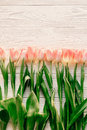 Pink tulips on white rustic wooden background flat lay. spring t Royalty Free Stock Photo
