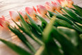 Pink tulips on white rustic wooden background. spring flowers i Royalty Free Stock Photo
