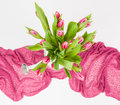 Pink tulips in white watering can bunch of on background Royalty Free Stock Images