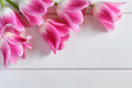 Pink Tulips on a white wooden planks Royalty Free Stock Photo