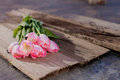 Pink tulips on wooden boards bunch of and white spring rough Stock Photos