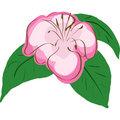 Pink vector flower Stock Image