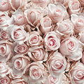 Rosa antiguo rosa