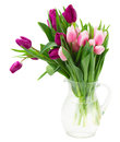 Pink and violet tulips bouquet of isolated on white background Stock Image