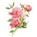 Pink watercolor peonies vintage greeting card