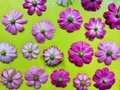 Cosmos flower isolated on green background Royalty Free Stock Photo